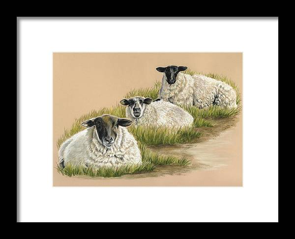 Three Irish Sheep Grazing Framed Print featuring the painting Tom Dick And Harry by Vanda Luddy