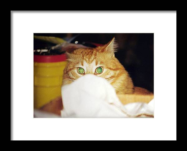 Cat Framed Print featuring the photograph Tommy by Kenneth Albin