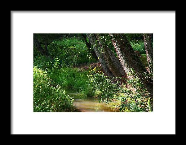 Toms Creek Framed Print featuring the photograph Toms Creek In Late Summer by Kathryn Meyer