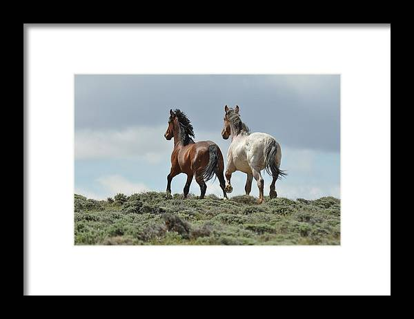 Wild Horses Framed Print featuring the photograph Too Beautiful by Frank Madia