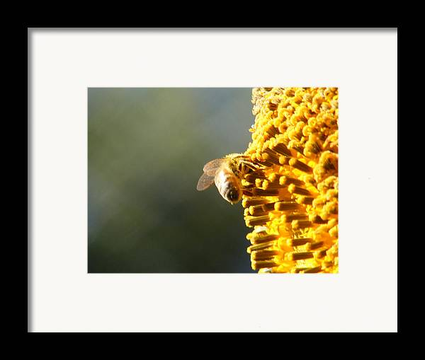 Bee Framed Print featuring the photograph Too Bee Or Not To Be by Gail Salitui