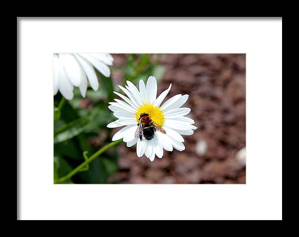 Bee Framed Print featuring the photograph Too Close For Comfort by Lita Kishbaugh