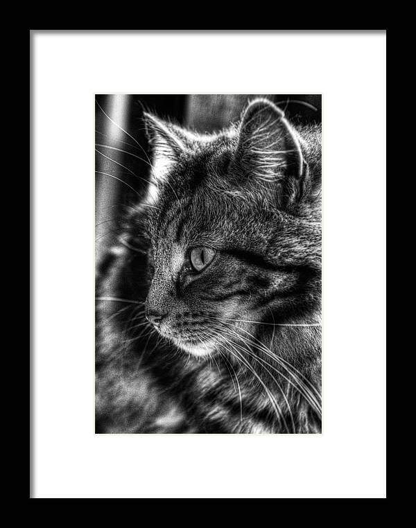 Cat Framed Print featuring the photograph Toots2 by Fraser Davidson