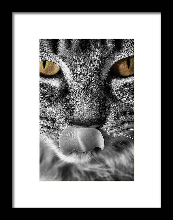 Cat Framed Print featuring the photograph Toots3 by Fraser Davidson