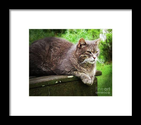 Cat Framed Print featuring the photograph Top Cat by Pete Hellmann