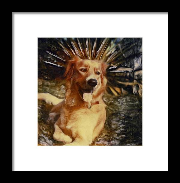 Dog Framed Print featuring the photograph Top Dog by Lou Novick