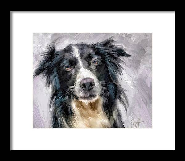 Border Collie Framed Print featuring the digital art Top Dog by Scott Waters