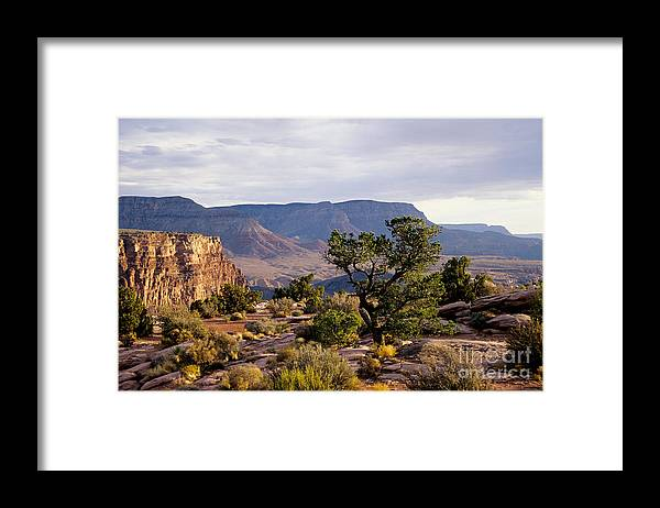 Arizona Framed Print featuring the photograph Toroweap by Kathy McClure