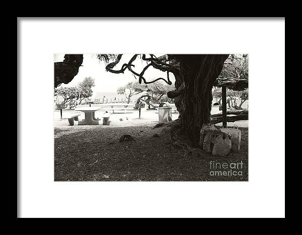 La Jolla Framed Print featuring the photograph Torrey Pines Baggage Claim by Heather Kirk