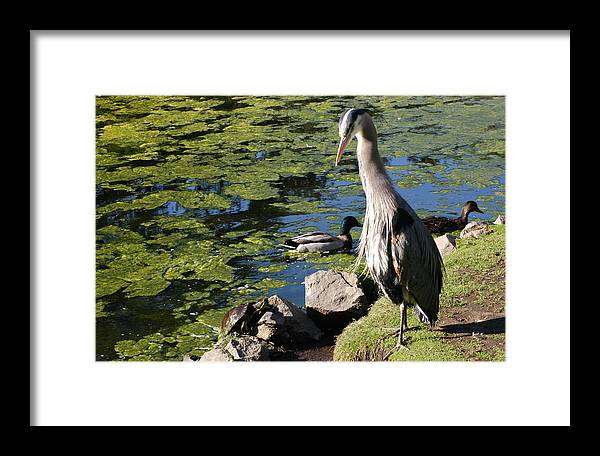 Bird Framed Print featuring the photograph Tortoise And The Heron by Owen Ashurst