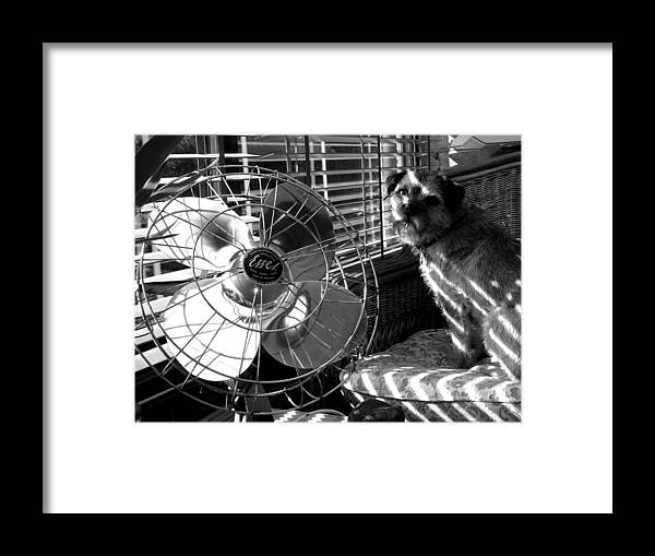 Electric Fan Framed Print featuring the photograph Toto Checks In by Charles Stuart