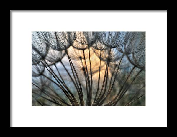 Dandelions Framed Print featuring the photograph Touch Of Light by Iris Greenwell