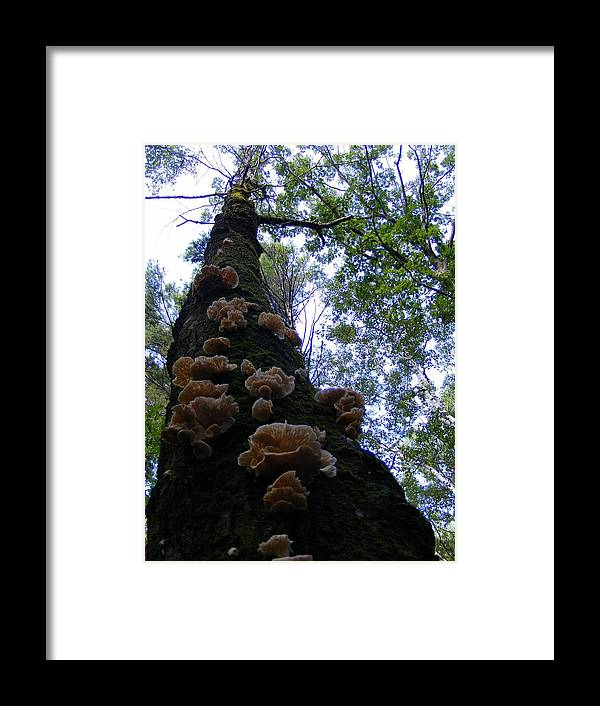 Mushroom Framed Print featuring the photograph Touch The Sky by Alison Heckard