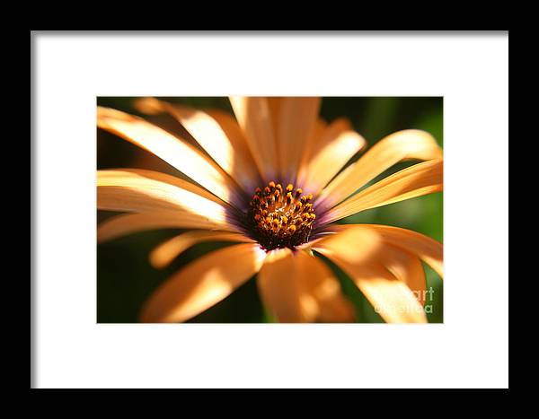 Sun Framed Print featuring the photograph Touched By The Sun by Amy Holmes