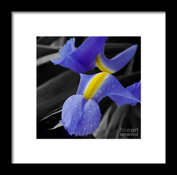 Flower Framed Print featuring the photograph Touching by Katherine Morgan