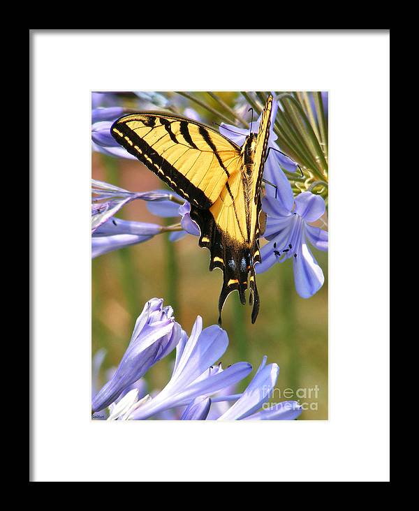 Butterfly Framed Print featuring the photograph Touching Lilly by Gail Salitui