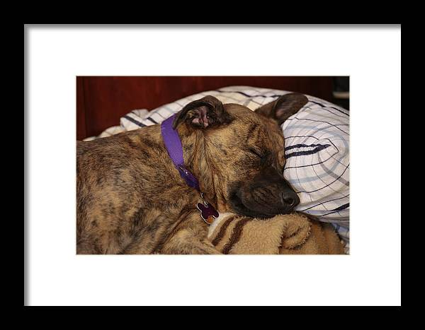 Dog Framed Print featuring the photograph Tough Life by Frank Guemmer