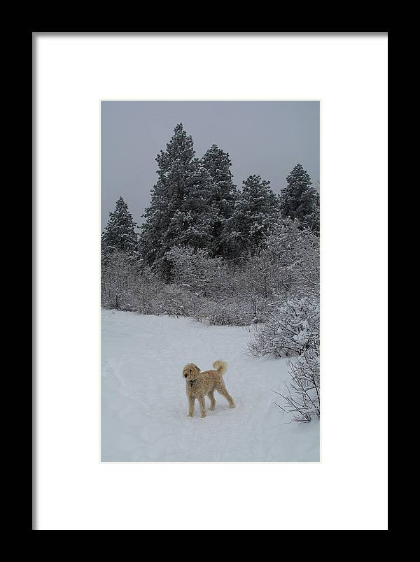 Flatirons Framed Print featuring the photograph Traildog Loving The Winter Scene In The Flatirons by Cary Leppert