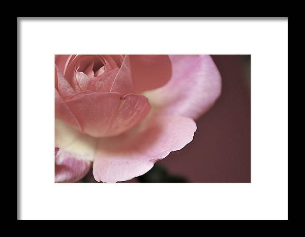 Flowers Framed Print featuring the photograph Tranquility by Donna Shahan