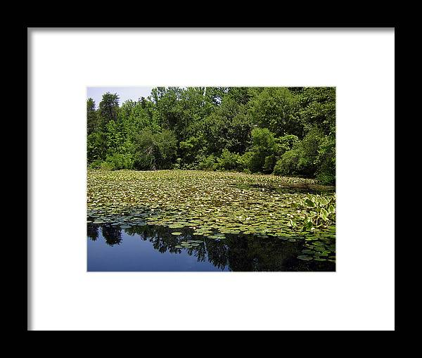 Tranquility Framed Print featuring the photograph Tranquility by Flavia Westerwelle