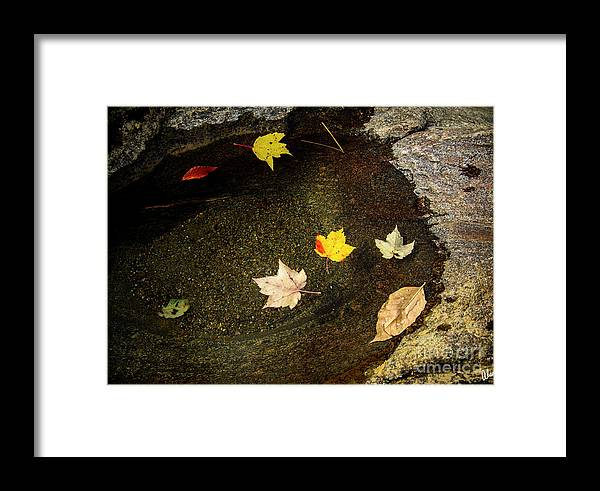 Leaves Framed Print featuring the photograph Traped by Alana Ranney