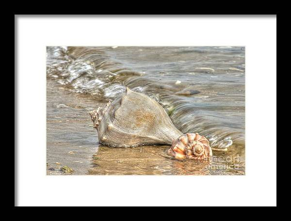 Emerald Isle North Carolina Framed Print featuring the photograph Treasures Found by Benanne Stiens