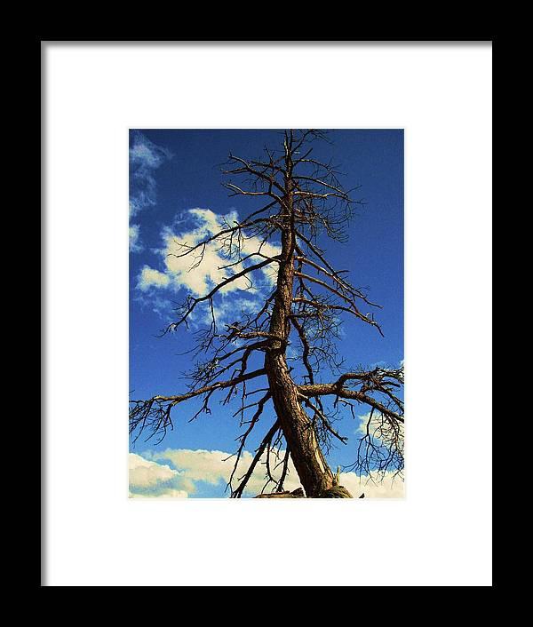 Tree Framed Print featuring the photograph Tree At Bryce Canyon Utah. by Martina Fagan