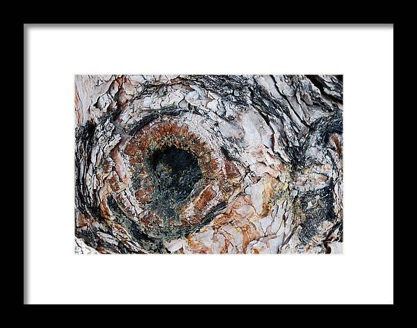 Tree Bark Framed Print featuring the photograph Tree Bark by Apurva Madia