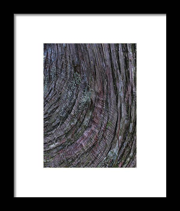 Tree Bark Framed Print featuring the photograph Tree Bark by Juergen Roth