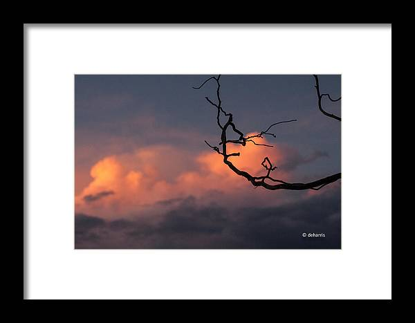 Sunset Framed Print featuring the photograph Tree Branch At Sunset by Dorothy Harris