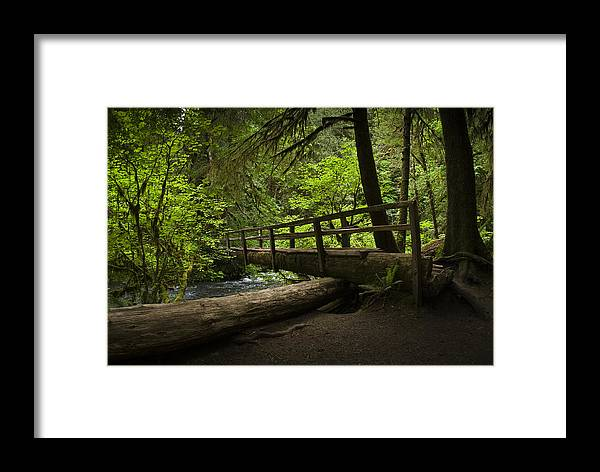 Chad Davis Framed Print featuring the photograph Tree Bridge by Chad Davis