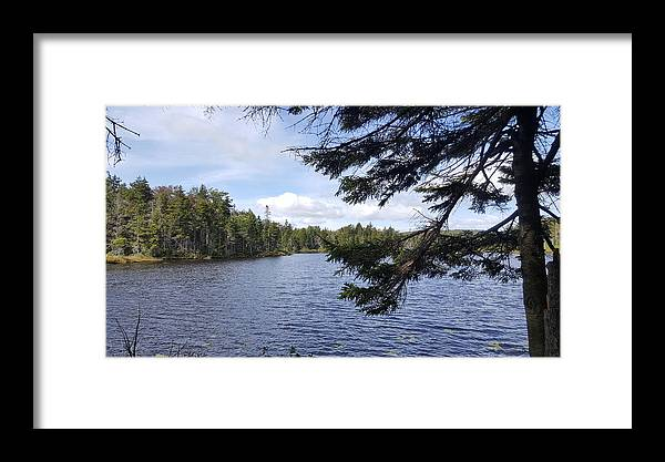 Trees Framed Print featuring the photograph Tree By The Water by Kevin Humphrey