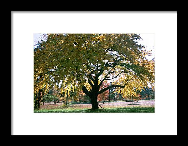 Tree Framed Print featuring the photograph Tree by Flavia Westerwelle