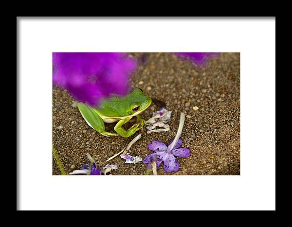 Green Framed Print featuring the photograph Tree Frog Under Flower by Douglas Barnett