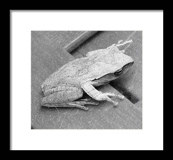 Tree Frog Framed Print featuring the photograph Tree Frog Up Late by Kathy Daxon