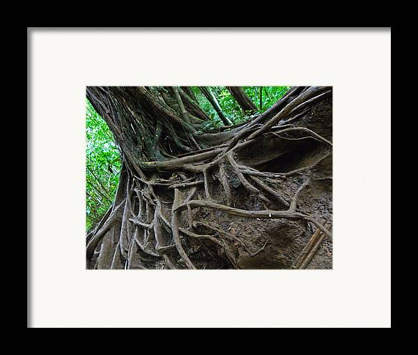 Hawaii Framed Print featuring the photograph Tree From Manoa Falls by Elizabeth Hoskinson