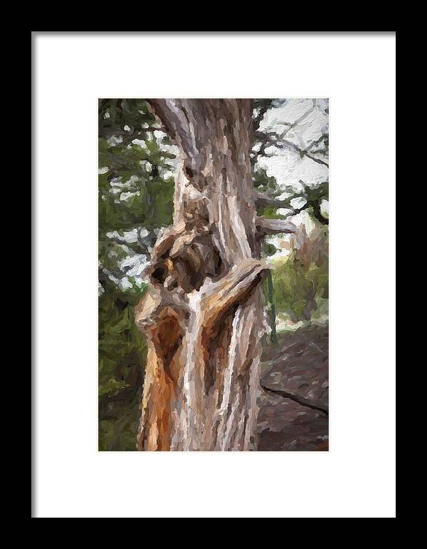 Gnarl Framed Print featuring the photograph Tree Gnarl by David Kehrli