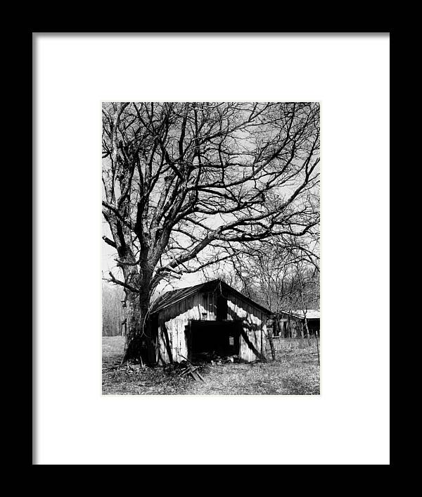 Ansel Adams Framed Print featuring the photograph Tree-hut by Curtis J Neeley Jr