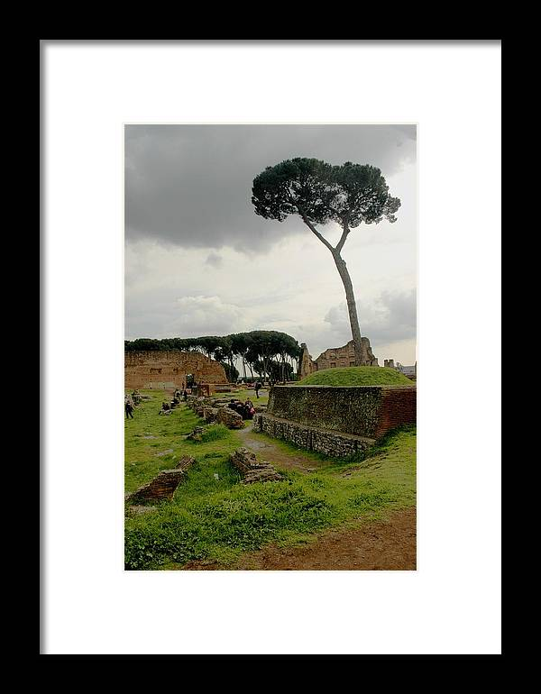 Tree Framed Print featuring the photograph Tree In Ancient Rome Landscape by Joseph Cossolini