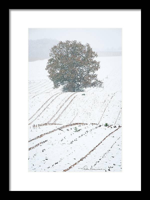 Corn Framed Print featuring the photograph Tree In Cornfield 7543 by Dan Beauvais
