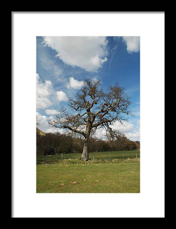 Trees Framed Print featuring the photograph Tree In Farndale by Doug Thwaites