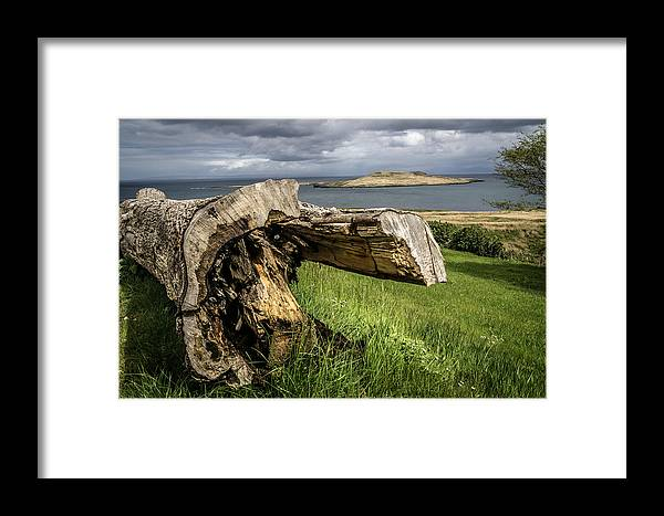 Tree Framed Print featuring the photograph Dead Tree Laying In Front Of A Lake by Ineke Mighorst