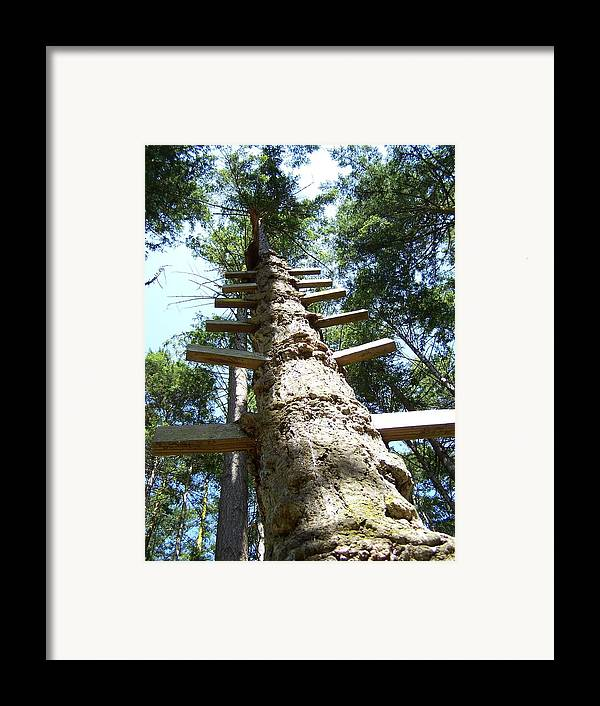 Ladder/ Tree Framed Print featuring the photograph Tree Ladder by Gene Ritchhart
