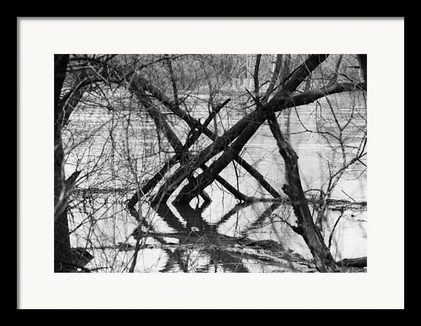 Photography Framed Print featuring the photograph Tree Line by Cynthia Ann Swan