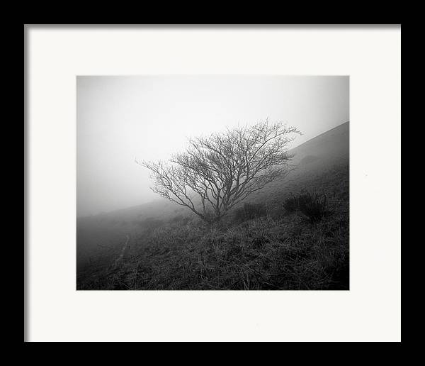 Nature Framed Print featuring the photograph Tree Mist by Benjamin Garvey