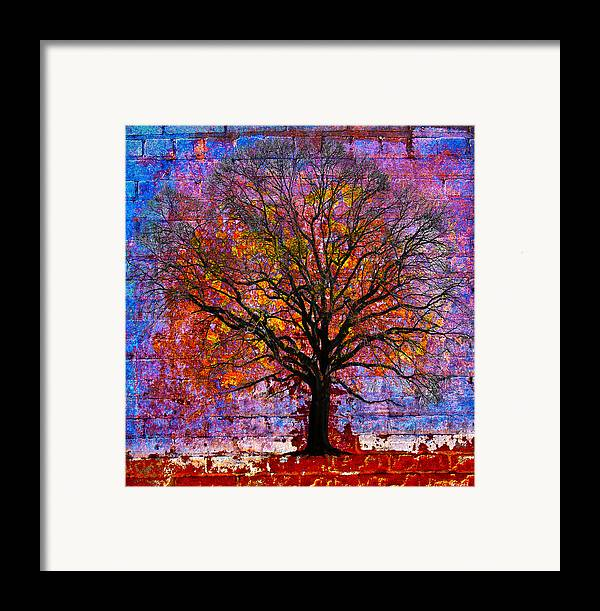 Tree Framed Print featuring the photograph Tree Of Life by David Clanton