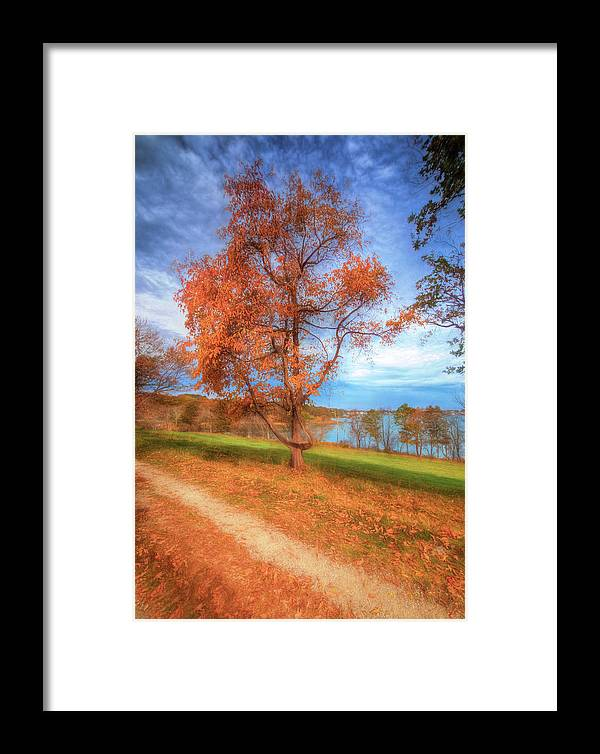 Framed Print featuring the photograph Tree On Fire by David Henningsen