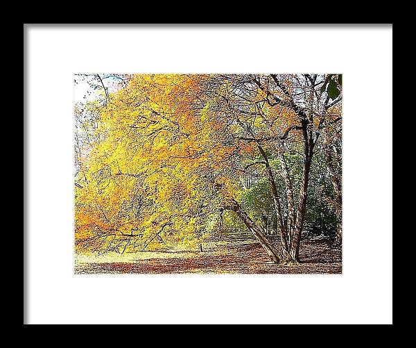 Autumn Framed Print featuring the photograph Tree On Fire by Karen King