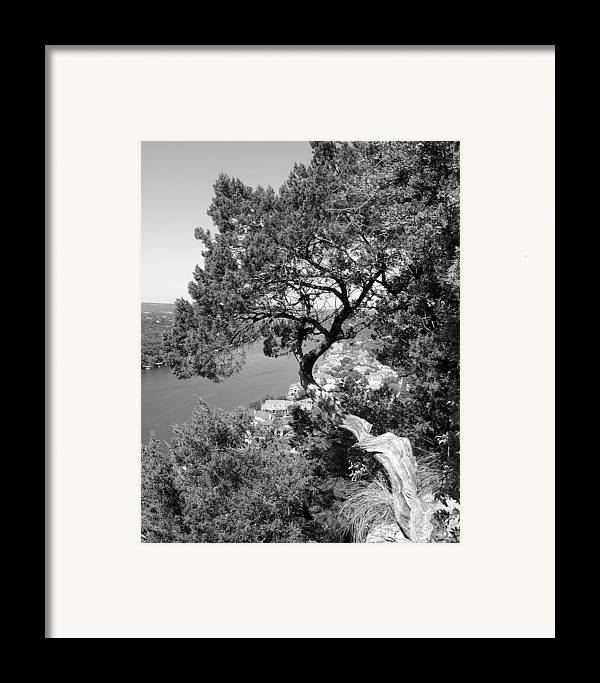 Mount Bonnell Framed Print featuring the photograph Tree On Mount Bonnell by Lindsey Orlando