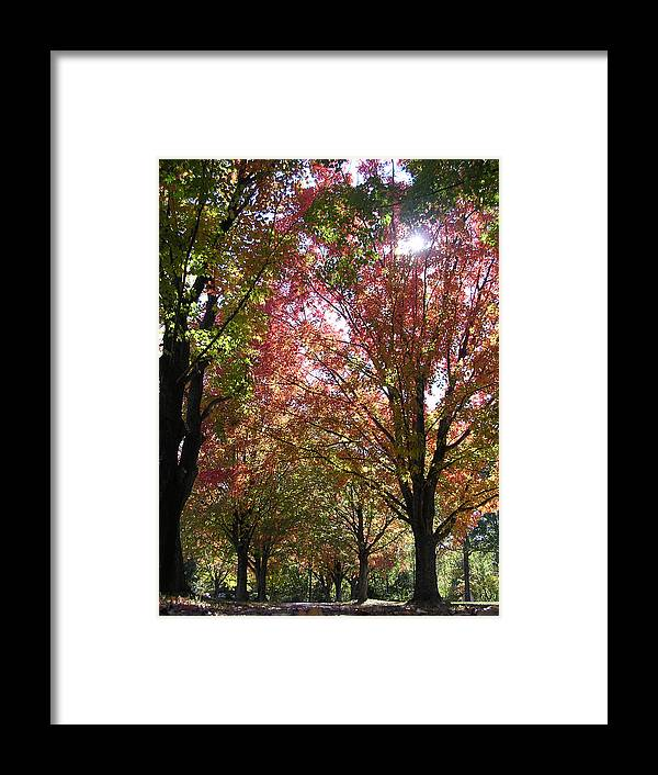 Trees Framed Print featuring the photograph Tree Pathway by Audrey Venute